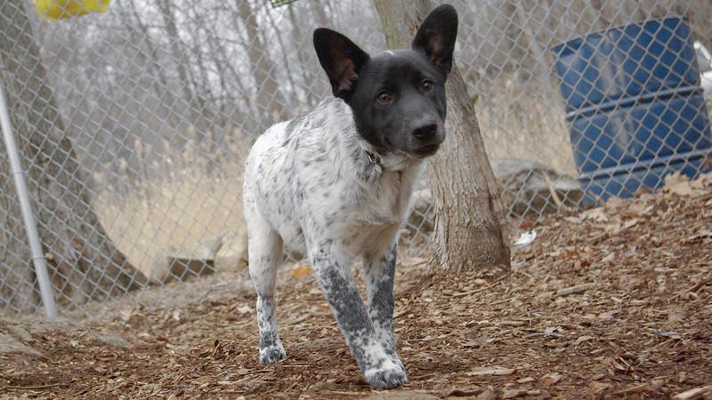 MURPHY (new pup) 4.jpg
