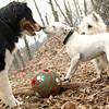 OLIVER, VIOLET (pup, 1st time)