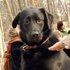 HARVEY ( guide pup, 1yr. wendy).JPG