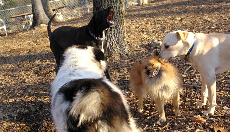 mojo, leo (new), Bailey (1 yr, newish)
