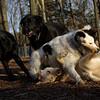 BAILEY, MARLEY (pups)