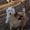 isabella, leo (new), Chloe (pup), Bailey