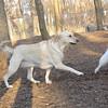 BARNI & Bobo (aka dumbo) 2