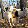 Bailey, leo (new), Marley ( boy pup)