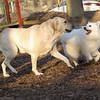 BARNI & Bobo (aka dumbo)