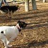 LEXIE (rat terrier), Maddie.JPG
