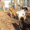 Harley, Dakota, Shamus, Oliver, maddie.JPG