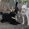 JET, maddie, bailey (new).jpg