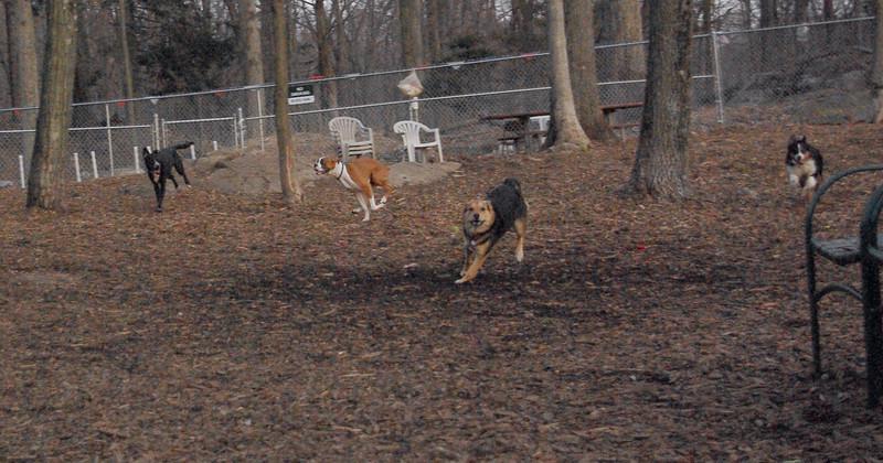 MADDIE (chase), Bubba, Oliver, Blackjack.jpg