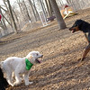BAILEY (wheaton), & REX (hound, doberman).jpg