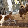 BRIN (new), Mack (bassett hound girl).jpg