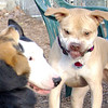 LUCY (pitbull), Bud, maddie.jpg