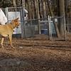 CHARLIE (dingo), Maddie ( stockdog)
