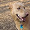 CHARLIE (dingo, new)