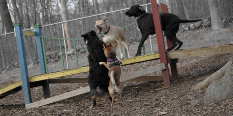 LUCY (pitbull), bridge war.
