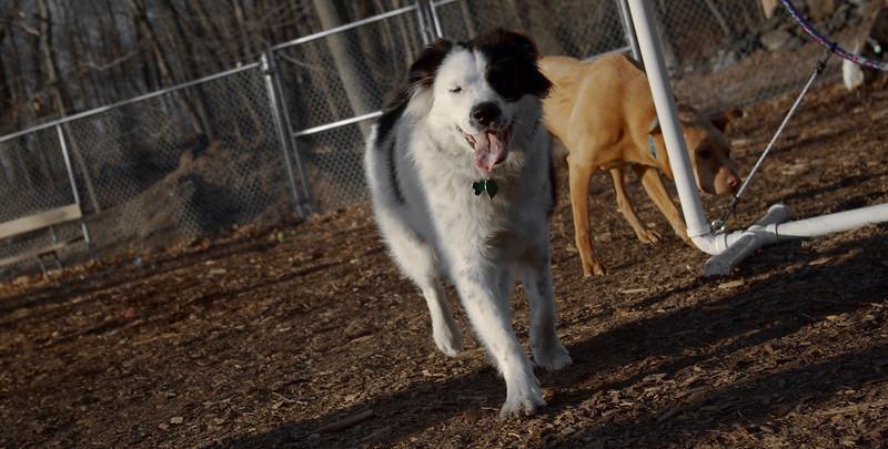 MARLEY (boy pup) 2