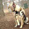 Lucy (pitbull), Maddie ( best friends) 2