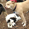 LUCY (pitbull), Maddie, Marley (boy)