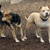 Lucy (pitbull), Maddie ( best friends) adventure