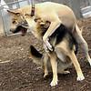Lucy (pitbull), Maddie ( best friends)