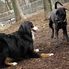 Charlie (black), Lola