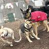 Lucy (pitbull), Maddie ( best friends), faith
