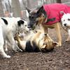 Maddie, Marley (boy), Faith, isabella 2