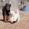 Eubie (rottweiler), Buddy (cairn)