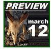 Blackbacked Jackal, Canis mesomelas, Kgalagadi Transfrontier Park, Kalahari, N Cape South Africa, NDE