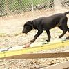 Dante (new, puppy) 5