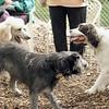 Brandy (spaniel), Ethel (poodle)