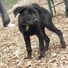 Dante (new, puppy) 16