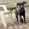 Dante (new, puppy) 15