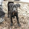 Dante (new, puppy) 10
