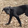 Dante (new, puppy) 14