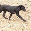 Dante (new, puppy) 12