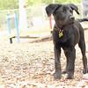 Dante (new, puppy) 13