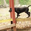Dante (new, puppy) 4