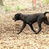 Dante (new, puppy) 3