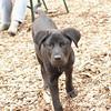 Dante (new, puppy) 11