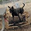 Charlie (girl), Maggie, Mocha 8