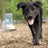 Dante (puppy, black) 10