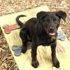 Dante (puppy, black) 13
