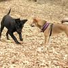 dante (puppy), Foxi