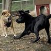 Dante (puppy), Foxi 9