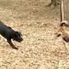 Dante (puppy), Foxi 3