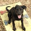 Dante (puppy, black) 12