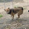 Dante (puppy), Foxi 7