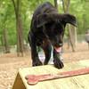 Dante (puppy, black) 11