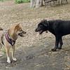 Dante (puppy), Foxi 6
